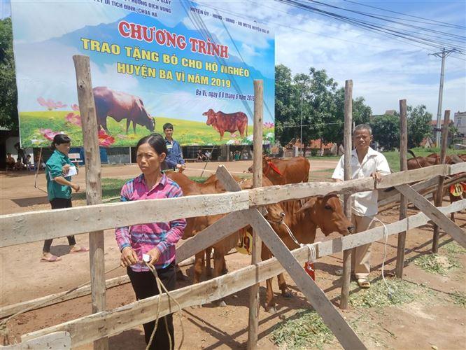 Ủy ban MTTQ Việt Nam huyện Ba Vì tổ chức chương trình trao bò cho hộ nghèo trên địa bàn huyện