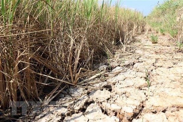 Hà Nội: Gửi tặng 2 tỷ đồng hỗ trợ nhân dân tỉnh Bến Tre và Kiên Giang khắc phục hạn mặn